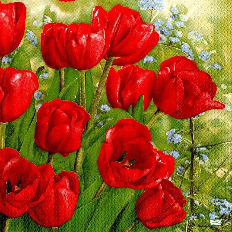 """Résultat de recherche d'images pour """"les tulipes"""""""